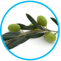 get-rid-of-dandruff-olive-oil