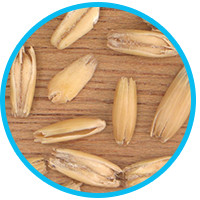 foods-that-prevent-hair-loss-wild-oats